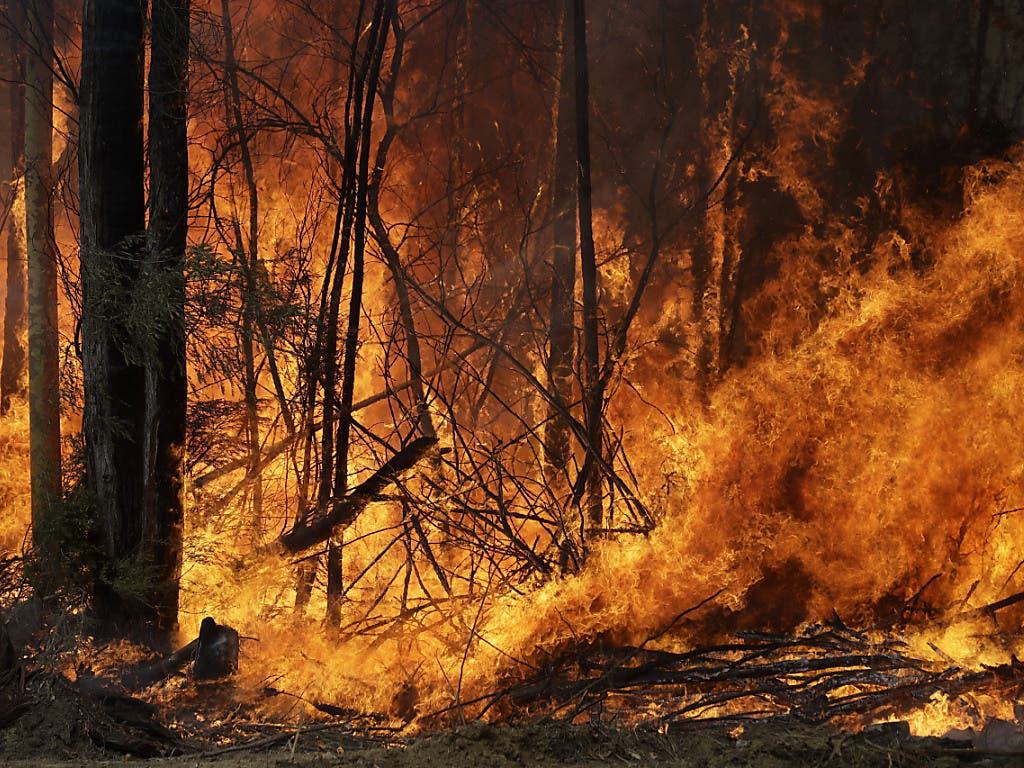 Durch eine erneute Hitzewelle droht eine Ausbreitung der Busch- und Waldbrände in Australien. Auf dem Bild ein Feuer bei Tomerong in New South Wales.