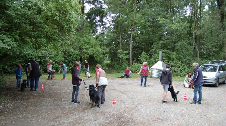 Kind-Hund Tag des Hundeclubs Weiningen mit dem Elternverein Obrengstringen, EVO
