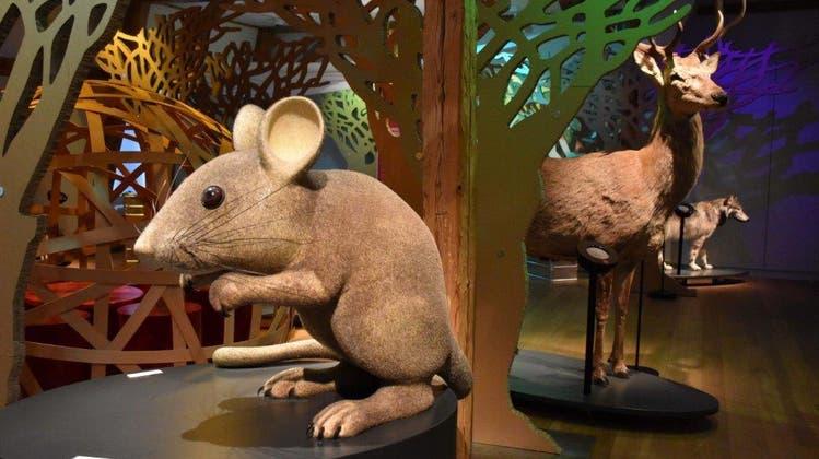 Wieso der Wolf so böse ist: Ausstellung ermöglicht das Eintauchen in die Welt der Tiere und Märchen