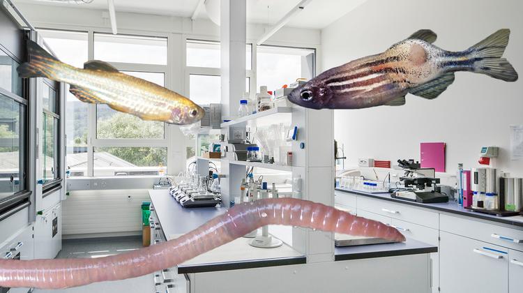 «Solothurn ist kein Tierversuchskanton» - aber auch bei uns gibt's jährlich Hunderte Versuche