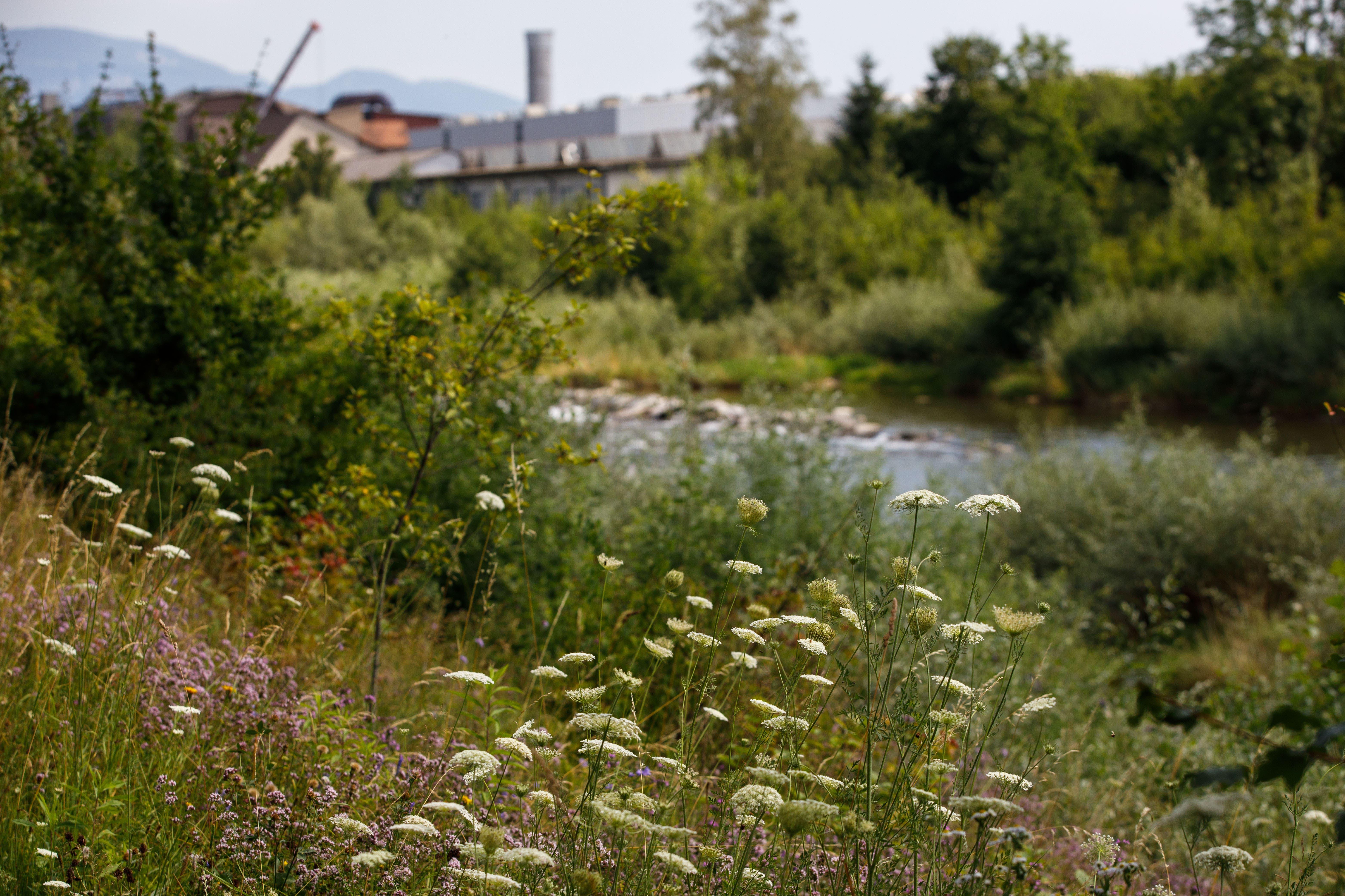 Zwischen der Bogenbrücke und der Emmebrücke ist die Vegetation vielfältig.