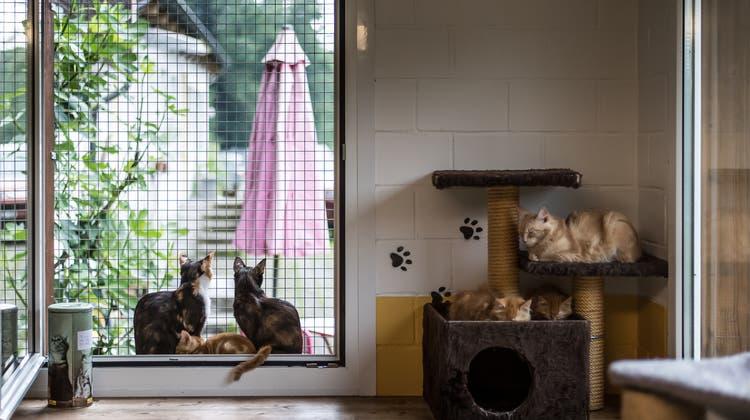 Sommerloch statt Stress: Tierheime verzeichnen wegen Corona deutliche Einbussen