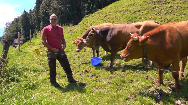 Nach Kuh-Attacke auf Familie – ein Bauer erklärt, wie sich Wanderer verhalten sollten