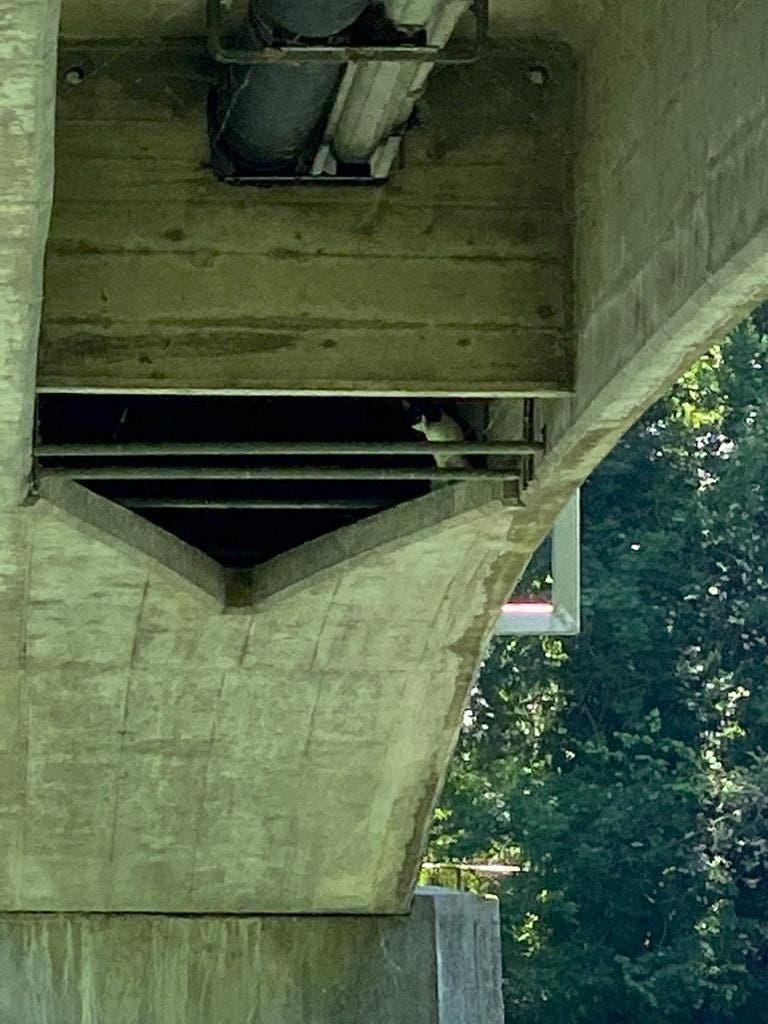 Passanten hörten von der Unterseite des Zurlinden-Stegs ein lautes Miauen.