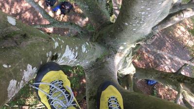 Wo die Vögel wohnen– Ausflug in eine Baumkrone