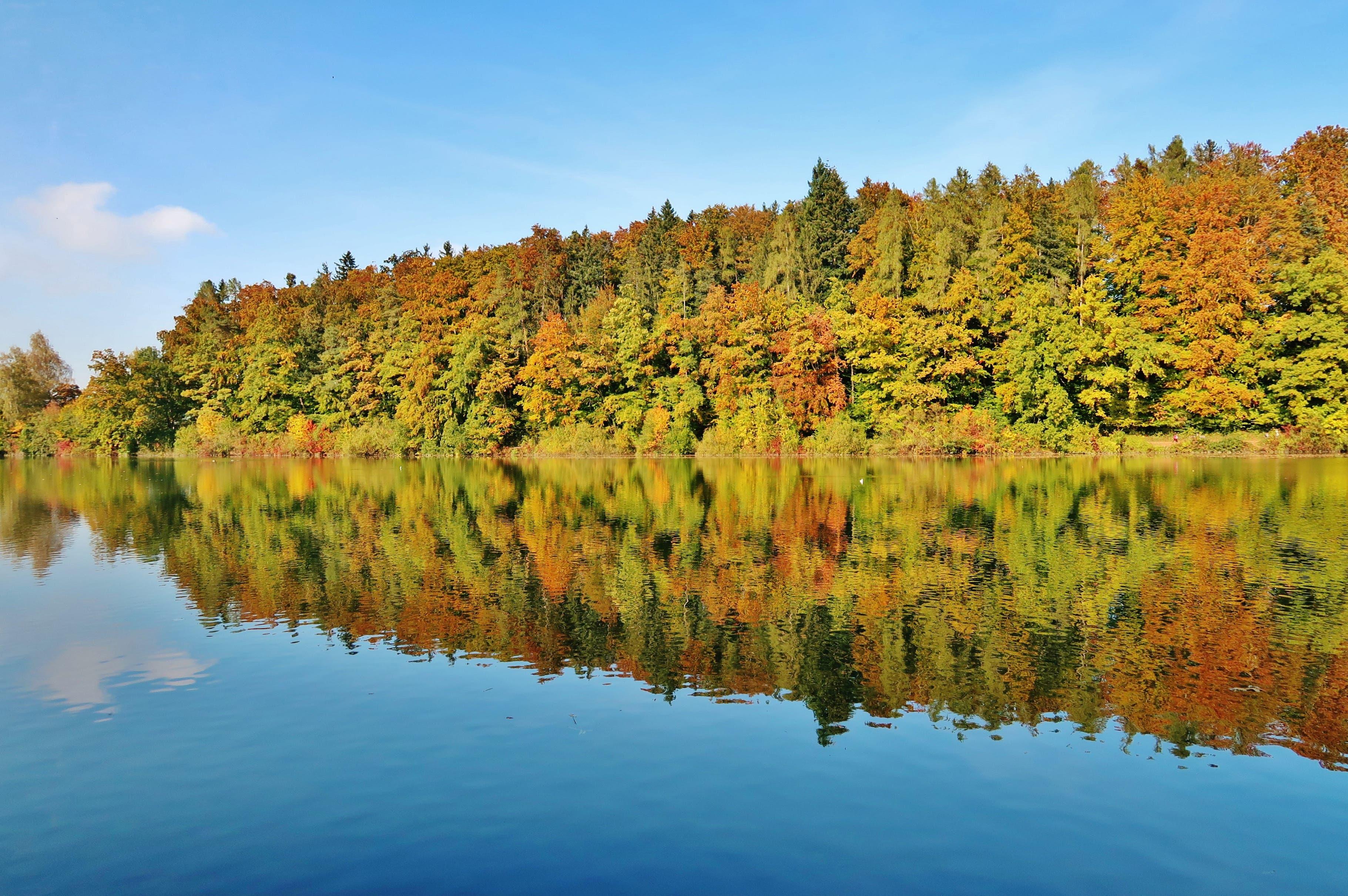 Herbst, gespiegelt im Gübsensee