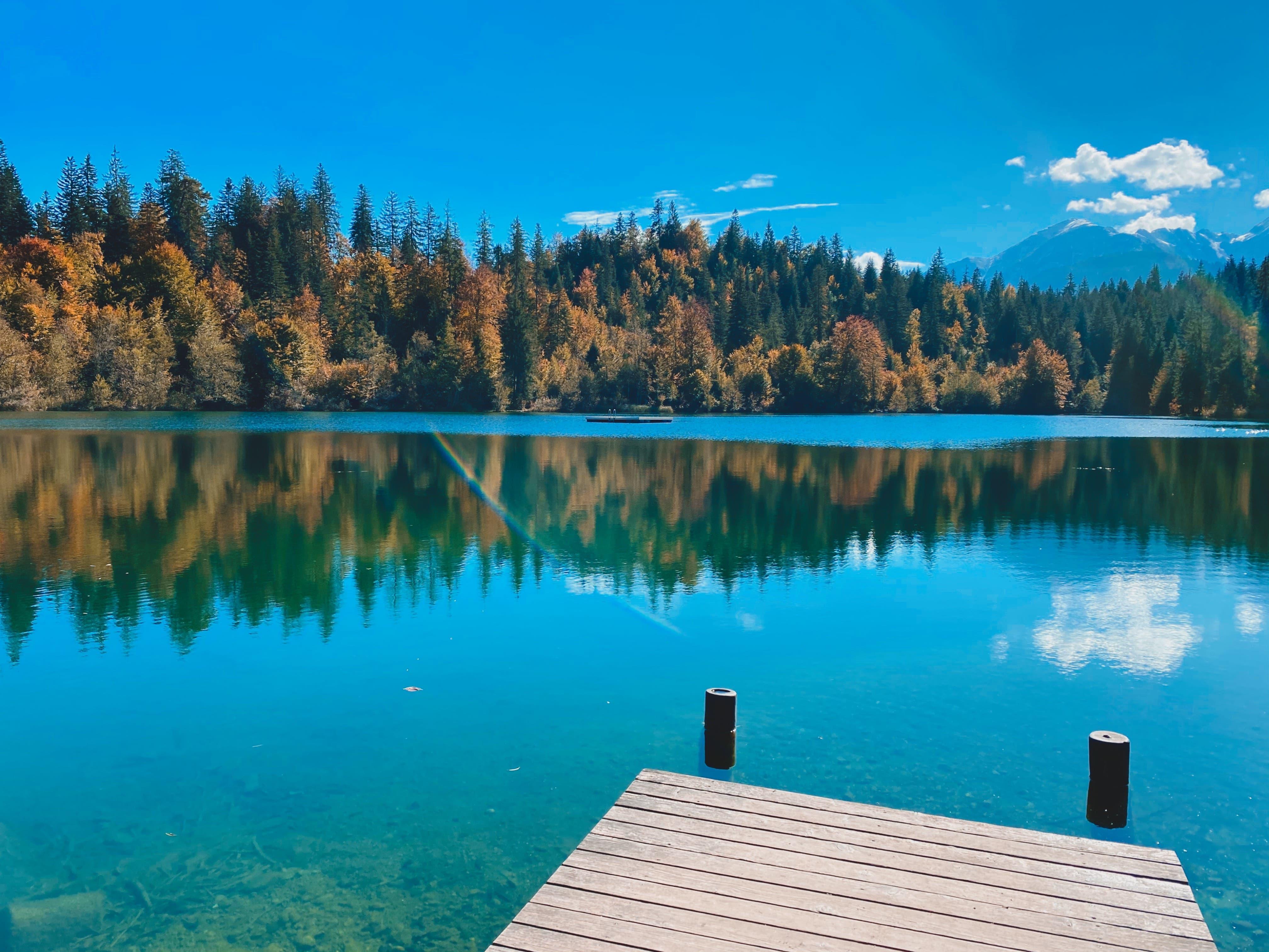 Herbstwald am Crestasee.