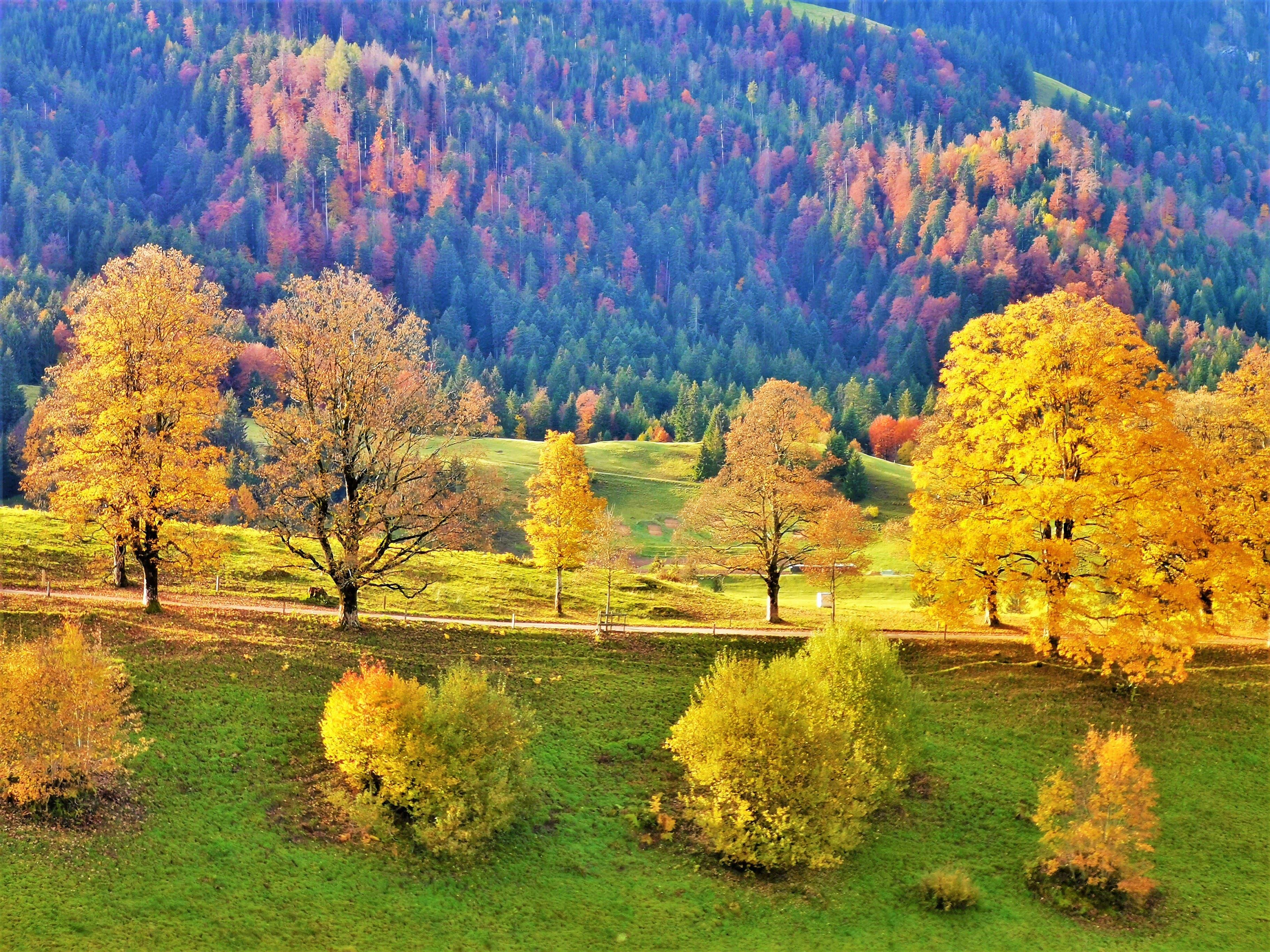 Goldener Herbst bei sonnigem Herbstwetter.