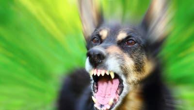 Vermehrt finden Hundebisse Eingang in die Statistik des kantonalen Veterinäramts. (Verkhovinets Taras)