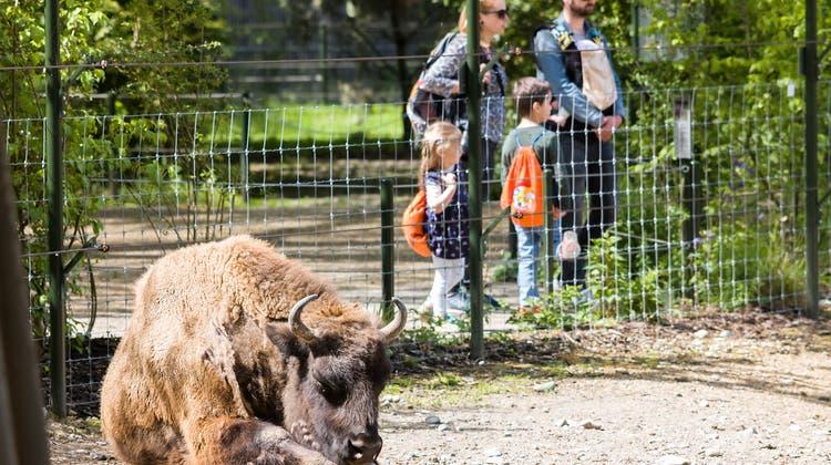 Tierpark Lange Erlen nach Wiedereröffnung: Es ist genügend Platz für alle da