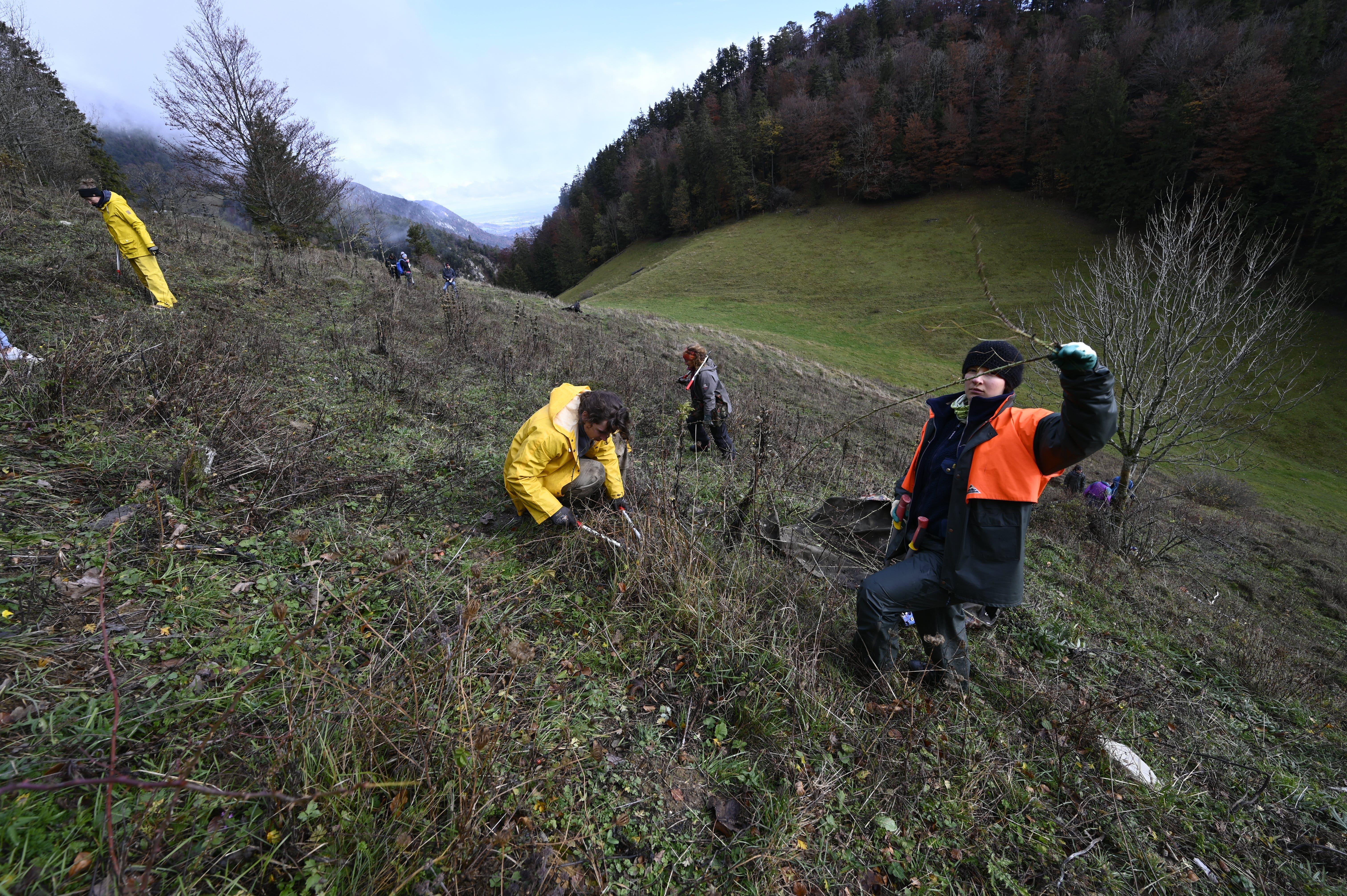 Körperliche Anstrengung für guten Zweck: Bergwald-Projekt-Team an der Arbeit oberhalb von Selzach.