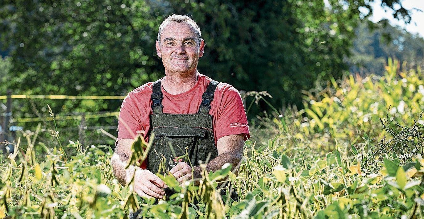 Stephan Wernli in Gebenstorf war zuerst skeptisch, nun ist er zufrieden. Der Ertrag ist gleich hoch - und das ohne Pestizide.