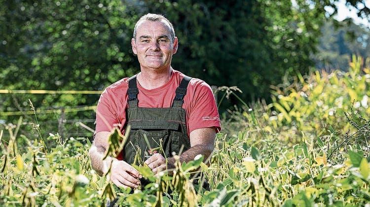 Stephan Wernli in Gebenstorf war zuerst skeptisch, nun ist er zufrieden. Der Ertrag ist gleich hoch - und das ohne Pestizide. (Bild: Sandra Ardizzone)