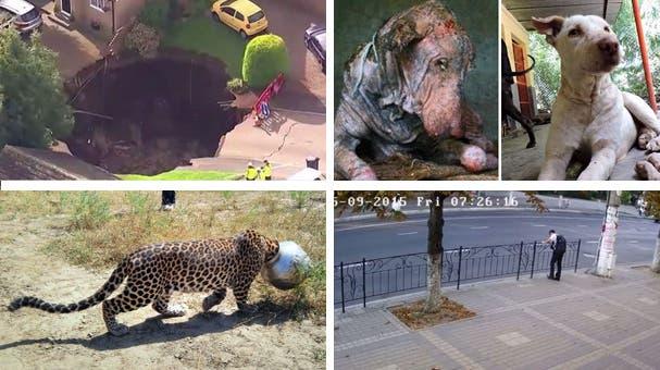 Für einen Hund, einen Leoparden und einen Jungen kommt die Rettung in letzter Sekunde
