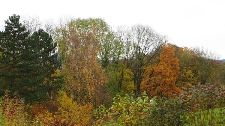 Herbstgedicht von Heinz Ehrhardt