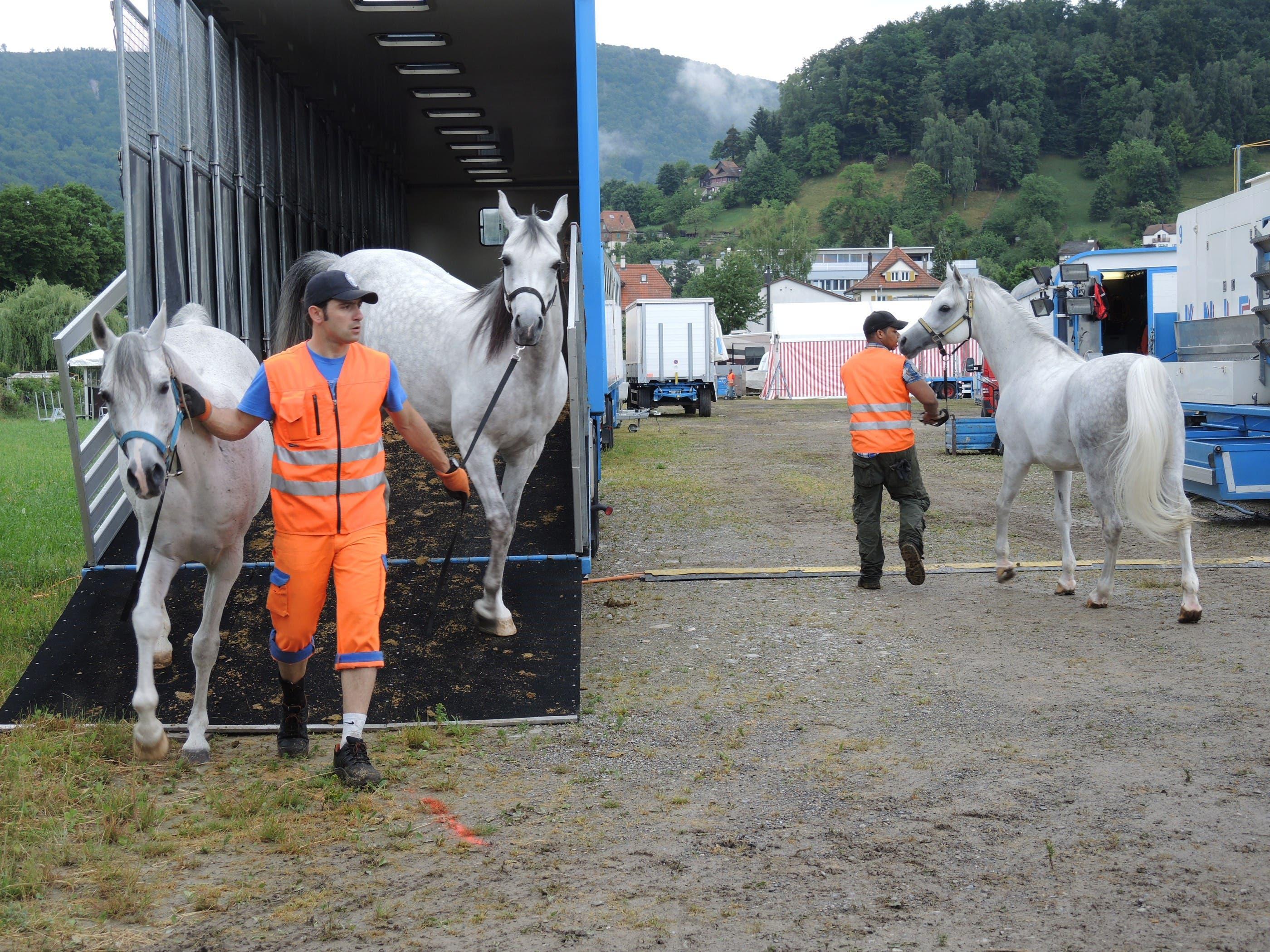 Sobald die Ställe fertig aufgebaut sind, werden auch die Pferde ausgeladen