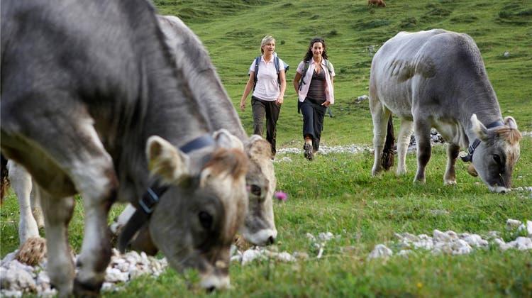 Nach tödlichem Kuh-Angriff: Gibt es Platz für Kuh und Mensch?