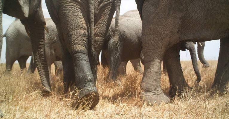 Eine Elefanten-Herde auf der Durchreise