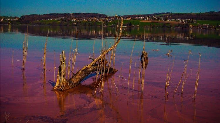Ohne «Burgunderblut» ist das Wasser so klar wie noch nie