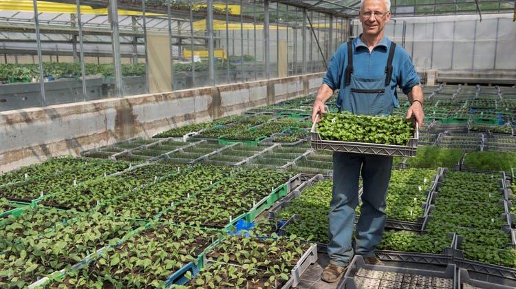 Viel zu tun für Setzlingsproduzenten: Eine neue Gartengeneration keimt auf