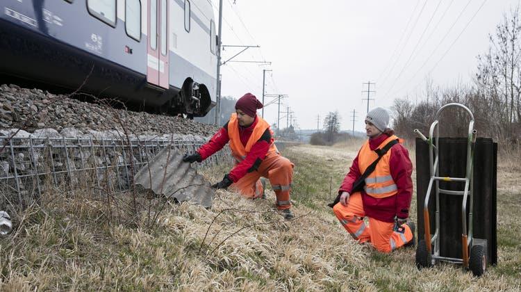 «Natur neben dem Gleis» - Die SBB sollen Lebensraum an Bahnböschungen fördern
