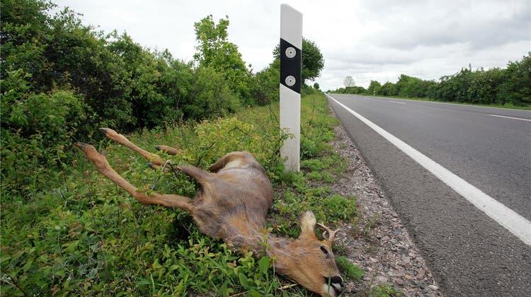 Im Baselbiet wurden so viele Tiere überfahren wie noch nie