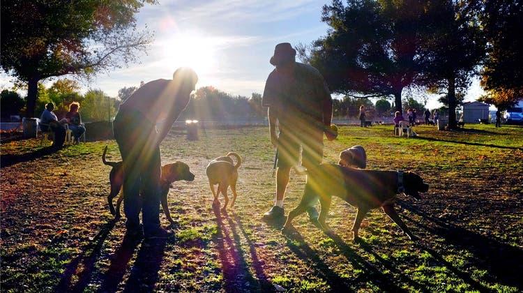 Ein Hund beisst nicht ohne Grund – so lernen Sie, die Körpersprache eines Hundes zu lesen