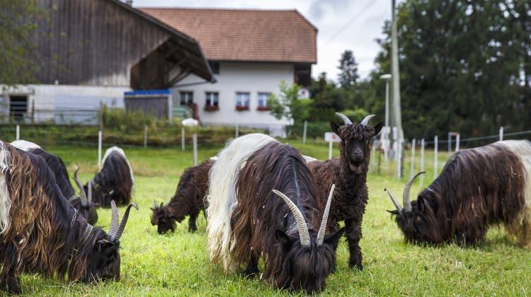 Wie lebt es sich ganz abgeschnitten vom Rest von Solothurn? Vier Begegnungen in Steinhof