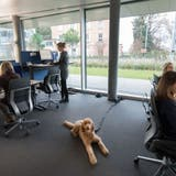Nestlé erlaubt Hunde am Arbeitsplatz