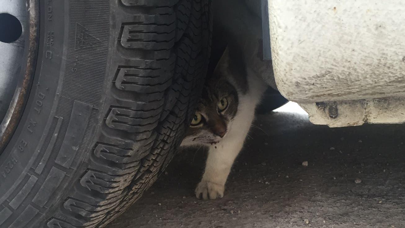 Die Katze erlitt laut dem Tierarzt lediglich oberflächliche Verletzungen.