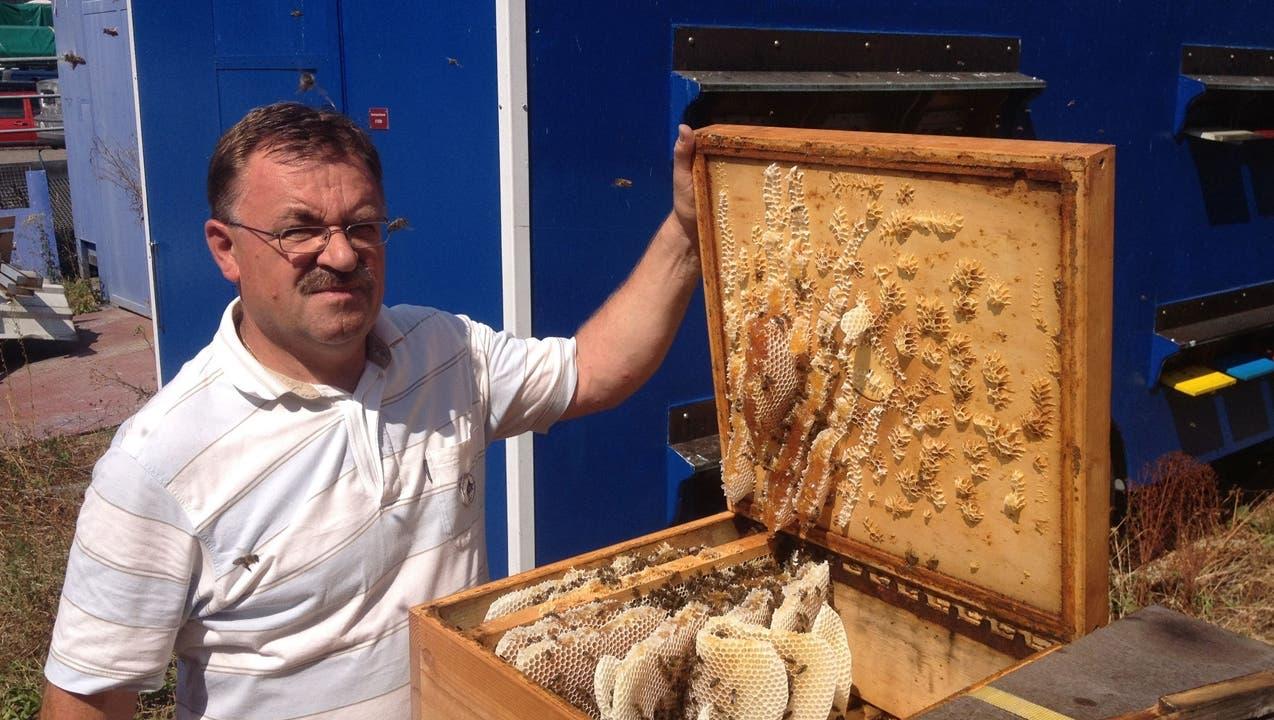 Fast alle Bienenvölker in der Region Basel haben den Winter überlebt