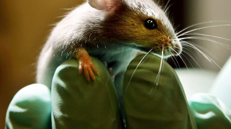 Universitäten Basel und Zürich investieren in Tierlabore