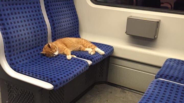 Vermisst jemand seine Katze? Sie fährt gerade S-Bahn!