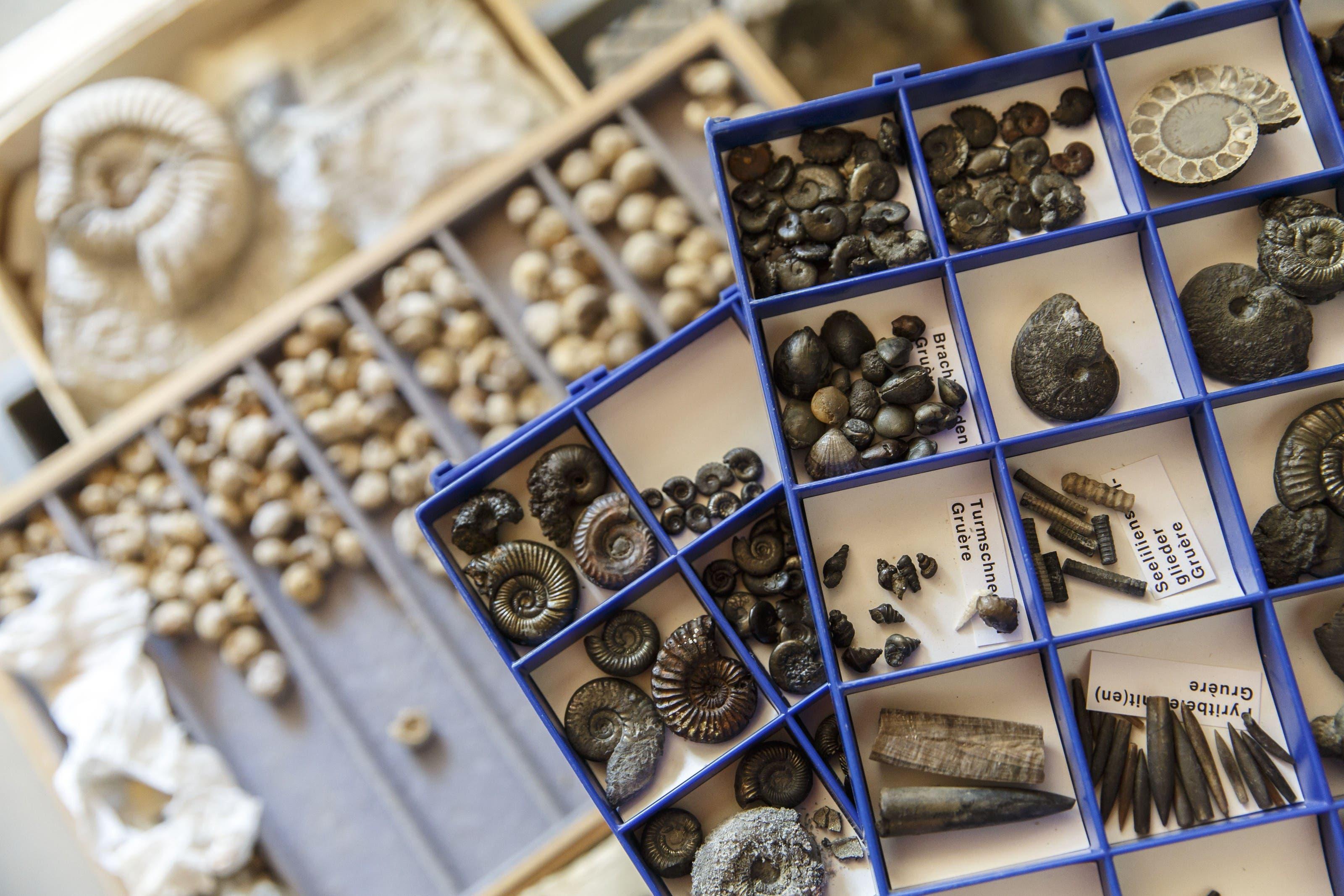 Schatztruhe aus einer anderen erdgeschichtlichen Epoche. Die Erzer-Sammlung ist ein wahrer Fund fürs Naturmuseum.