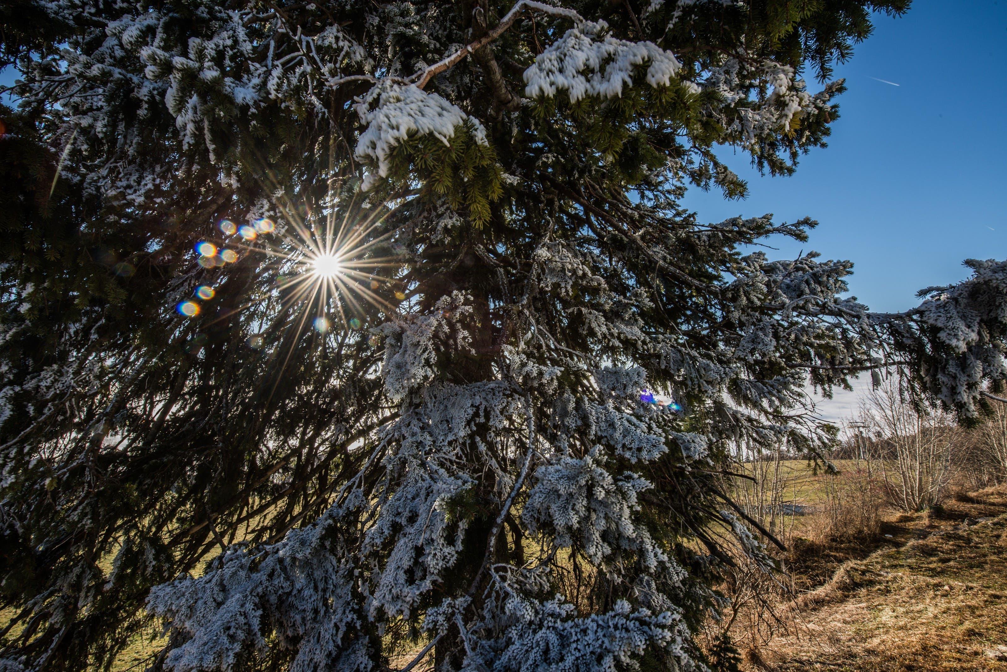 Die Sonne scheint durch die Bäume hindurch