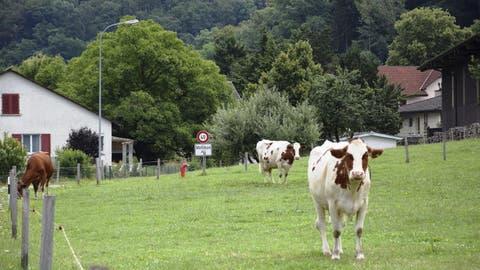 In dieser Aargauer Gemeinde sagten nur sieben Stimmbürger Ja zur USR III