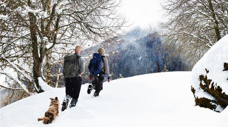 Im Tal der Wölfe: Nach illegaler Erschiessung wird jetzt mit Kopfgeld nach dem Täter gesucht
