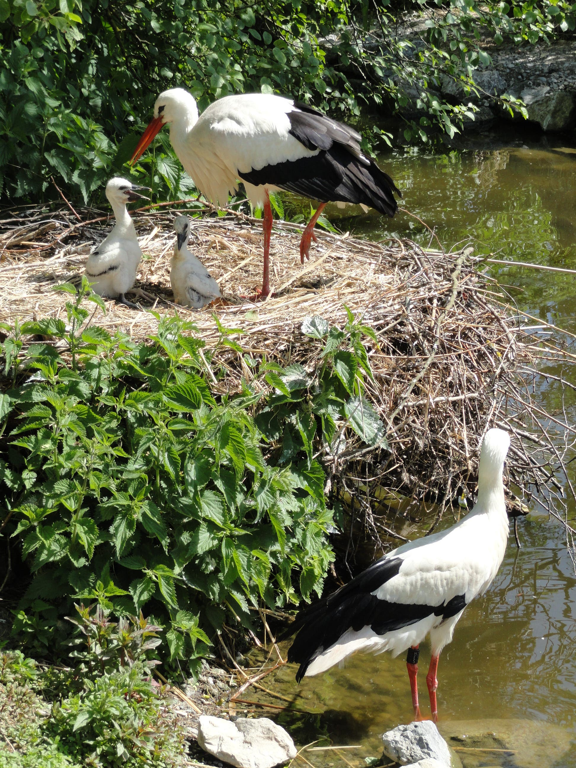 undefined Familie Storch geniest den milden Frühlingstag