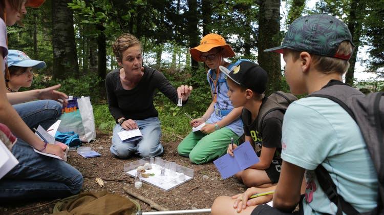Kinder sollen auch in ihrer Freizeit Käferforschung betreiben