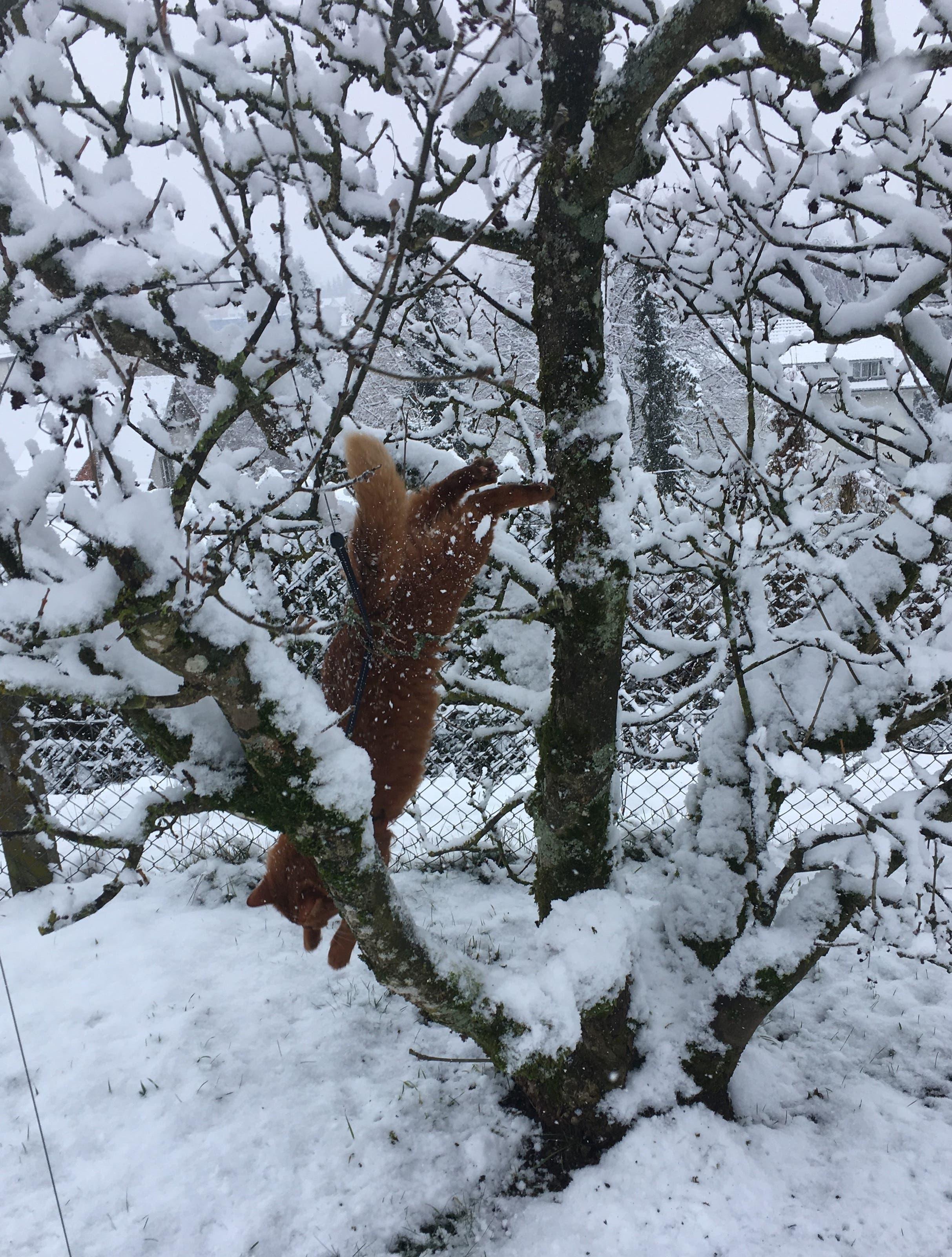 undefined Solch ein Winterzauber macht doch tierisch Spass!