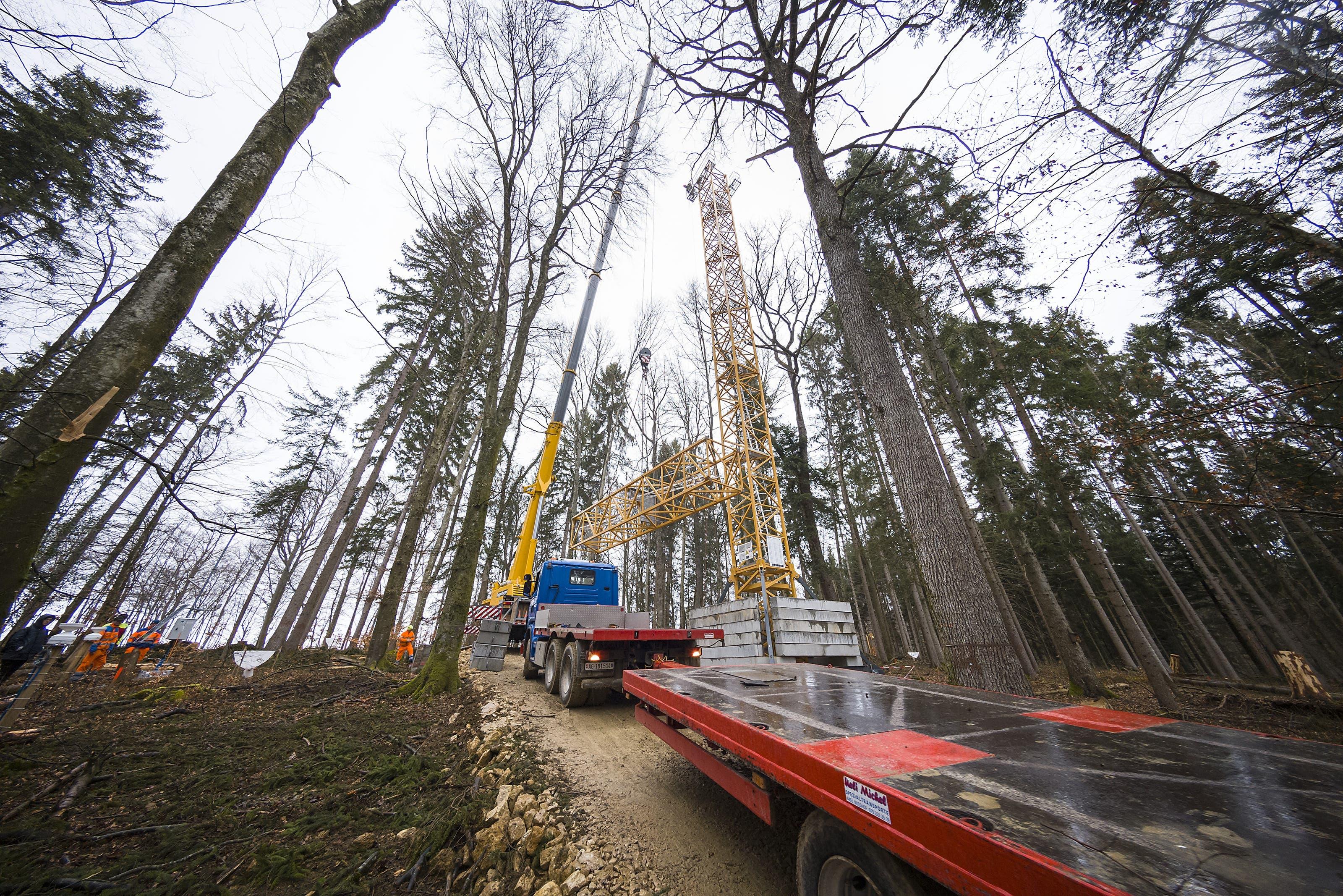 Waldexperiment Die Uni Basel untersucht mittels grossangelegtem Waldexperiment Auswirkungen des Klimawandels
