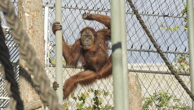 In Basel kommen die Rechte der Affen vors Volk
