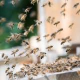 In diesen drei Limmattaler Gemeinden gibts Bienen-Geld