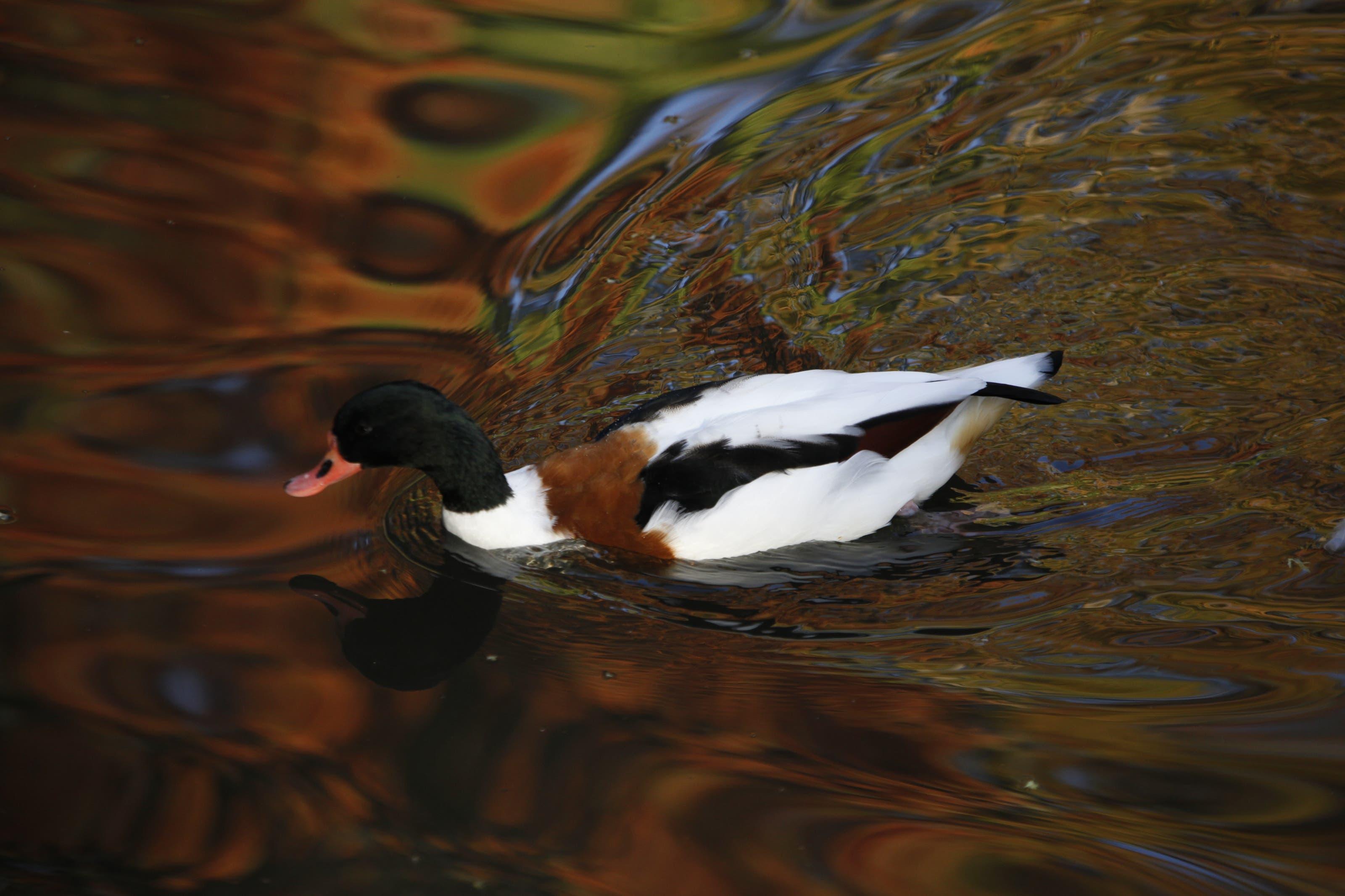 undefined Herbstspiegelung im Entenweier