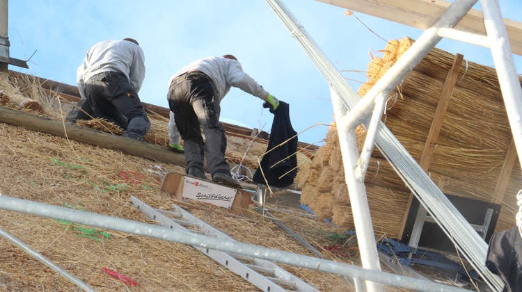 Im Dorf der Strohdachhäuser wird eins frisch eingedeckt – mit 40 Tonnen Schilf aus Holland