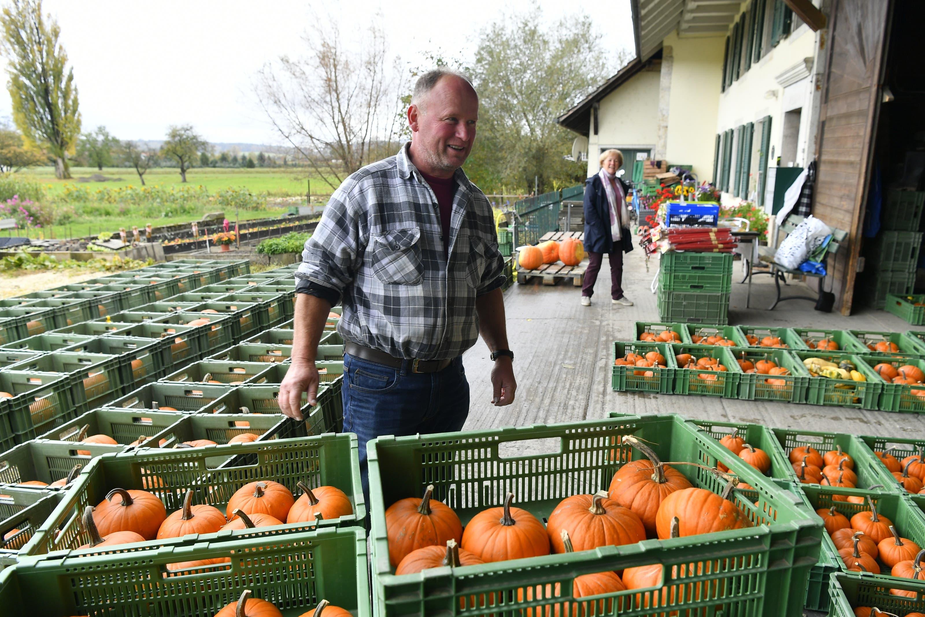 Lehrpersonen holen bei Gemüsebauer Willy Gloor in Staad die bereitgestellten Kürbisse ab.