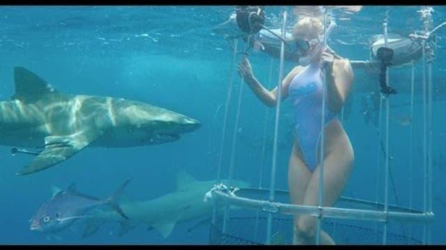 Zum Heulen: Pornodarstellerin wird bei Videodreh (offenbar) von Hai gebissen