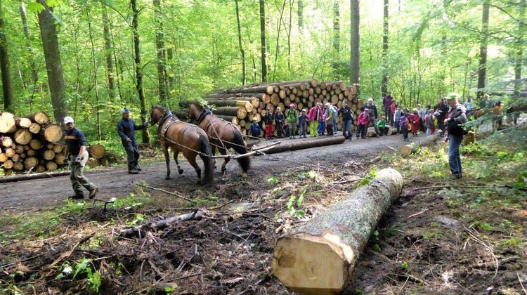 Jubiläumsanlass von «Forst Thal»: Schüler erleben die Vielseitigkeit des Lebensraumes Wald
