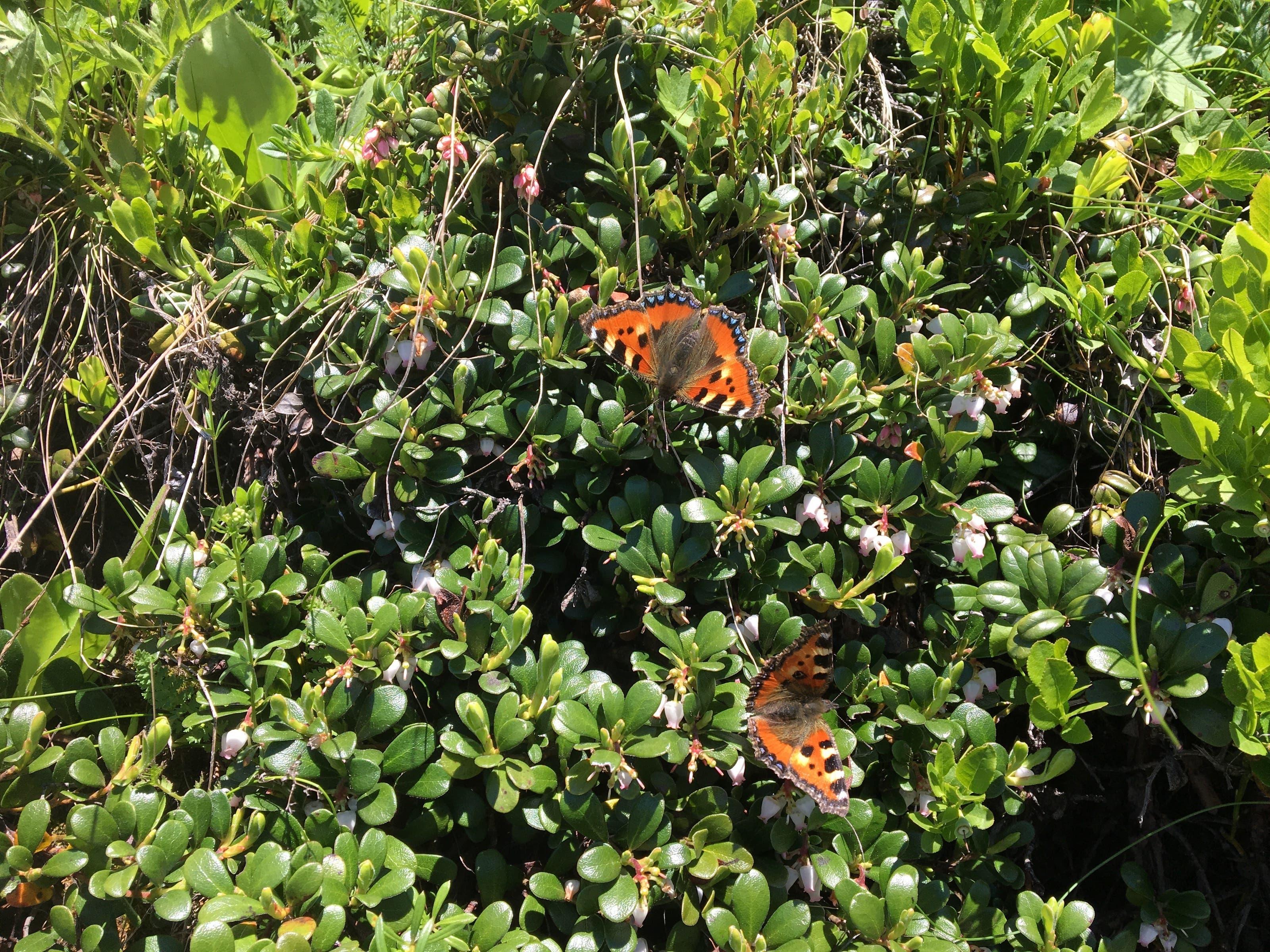 undefined Schmetterling an der Tankstelle