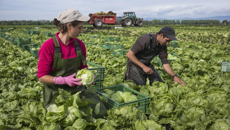 Die Aargauer Landwirte plädieren für Verhältnismässigkeit und Rücksicht auf die einzelne Region